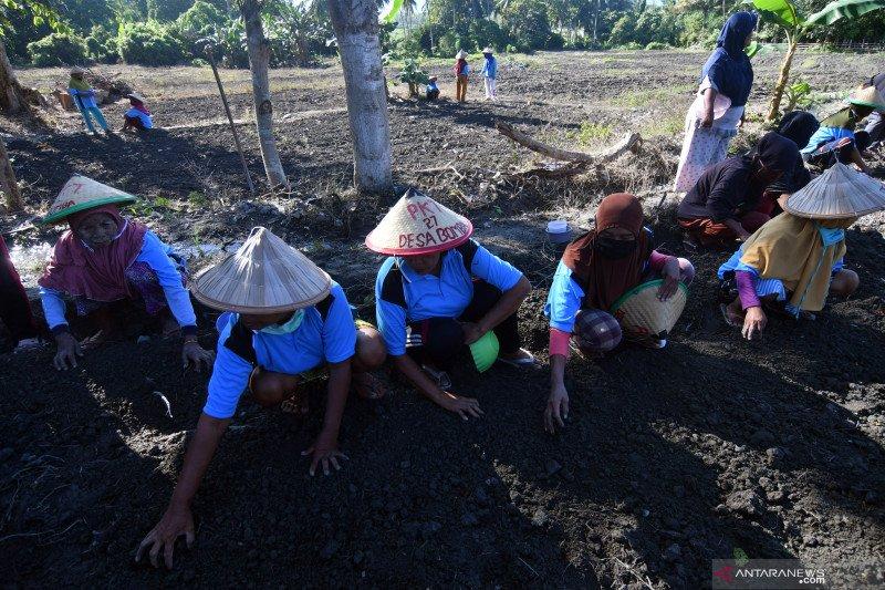 Mendes : Padat Karya Tunai Desa bakal serap 7,05 juta tenaga kerja