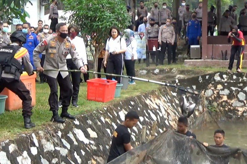 Polda Babel panen perdana 350kg ikan patin