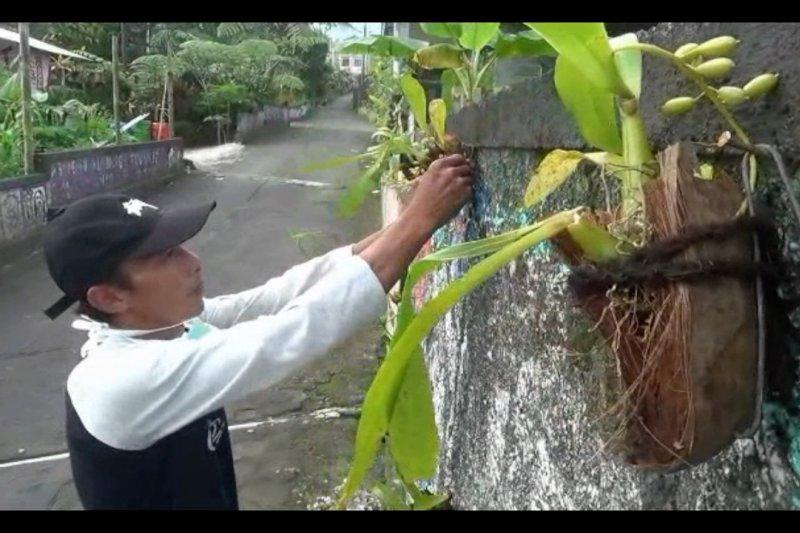 Warga lereng Merapi rintis wisata anggrek