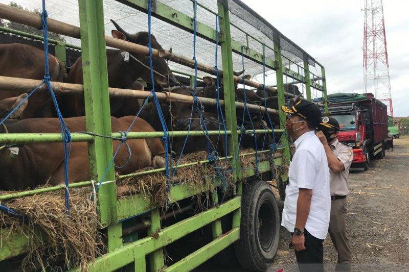 Balai Karantina Denpasar pastikan pengeluaran sapi bali penuhi syarat