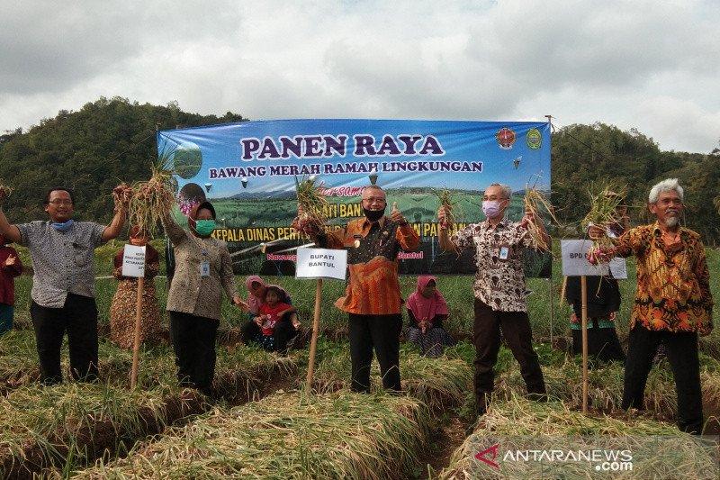 Bantul panen raya bawang merah ramah lingkungan