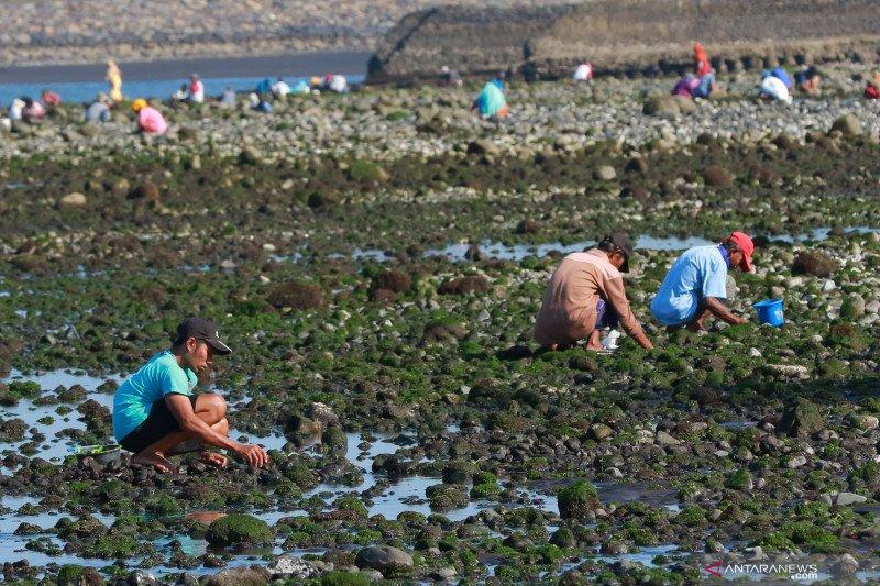 Warga mencari kerang di Pantai Cacalan