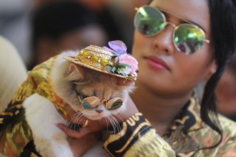 Dokter hewan berbagi kiat merawat kucing lokal