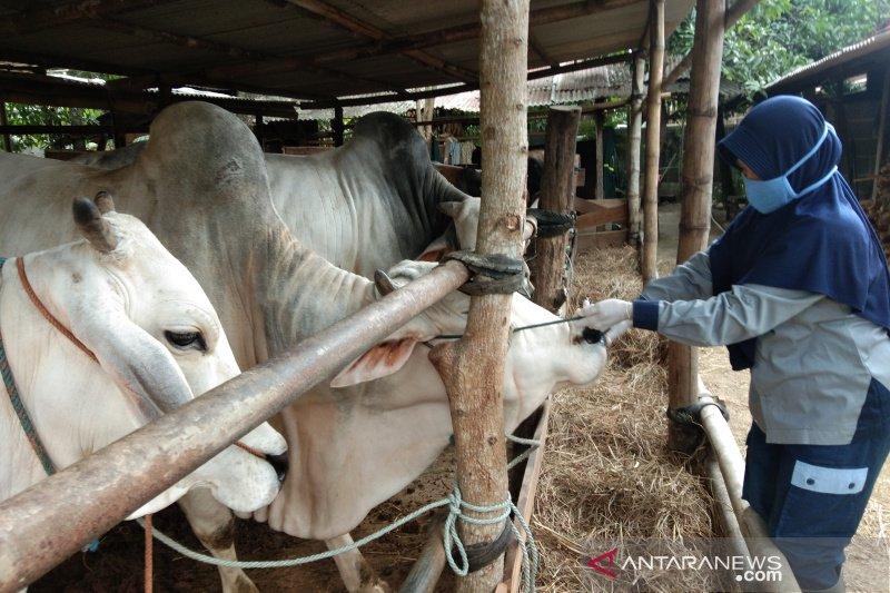 Gugus Tugas siapkan aturan pemotongan hewan kurban