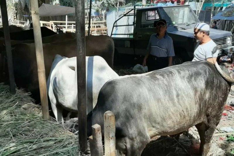 Wali Kota Bogor setujui edaran mengenai pemotongan hewan kurban