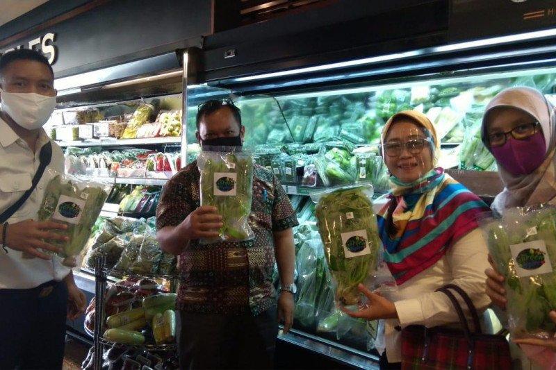 Produk pertanian Karang Taruna di Jaksel masuk pasar modern