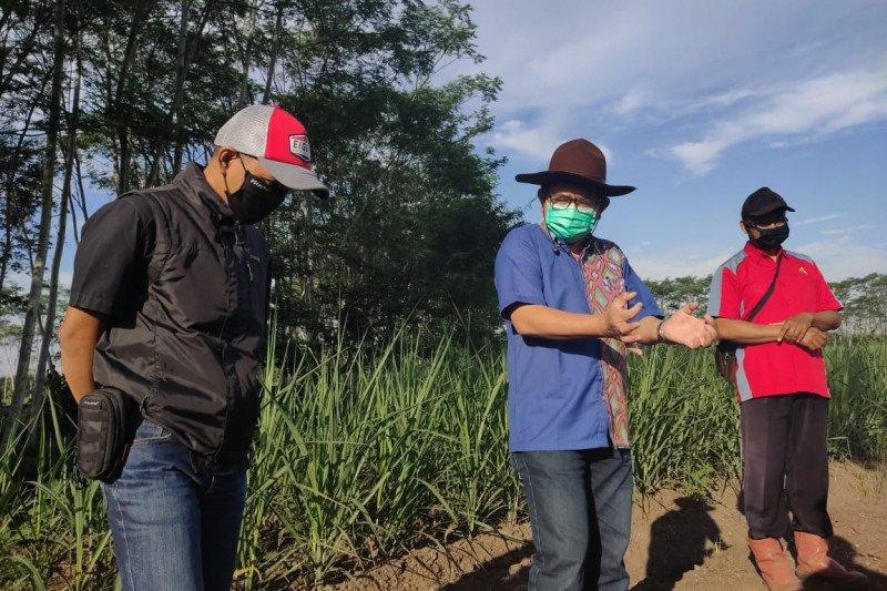 PTPN XI pastikan kecukupan bahan baku tebu di musim giling 2020