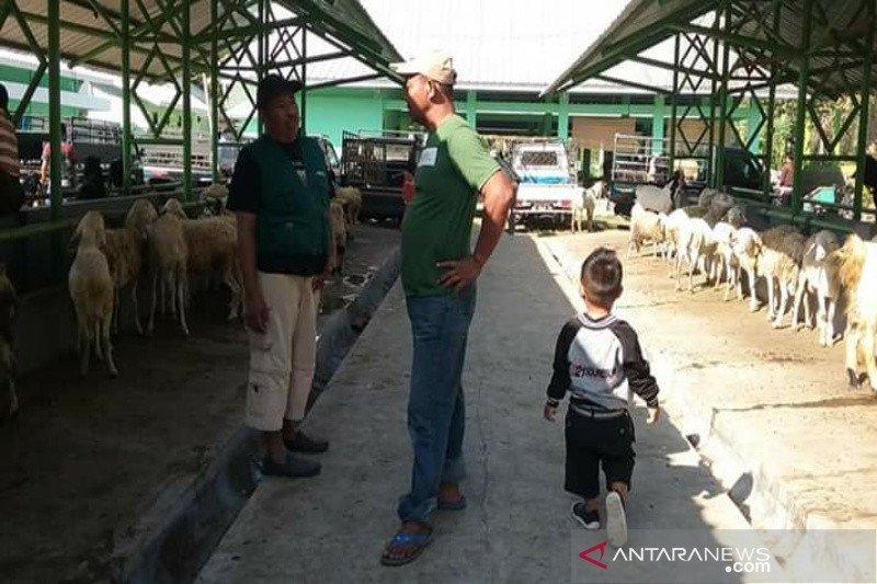 Permintaan hewan kurban dari Gunung Kidul sangat tinggi