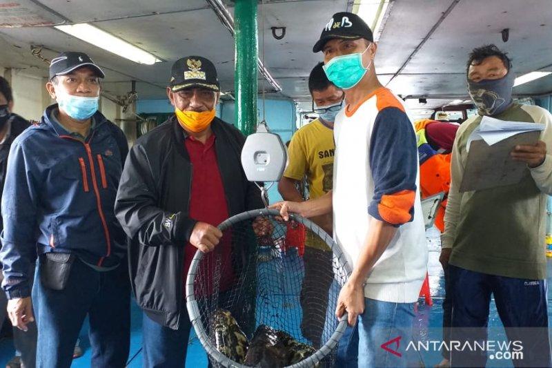 15 ton kerapu diekspor ke Hong Kong setelah ekonomi dibuka
