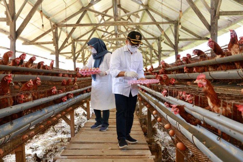 Kementan - KPPU optimalkan pengawasan kemitraan usaha peternakan