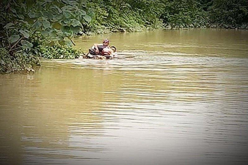 Penyuluh pertanian  terobos banjir  Lamandau menggunakan batang pisang