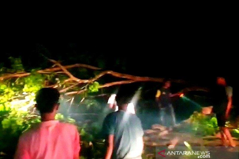 Ratusan kendaraan terjebak macet di Nagan Raya akibat pohon tumbang