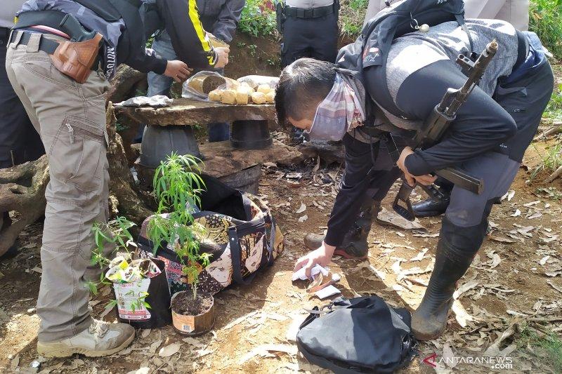 PTPN VIII angkat bicara kasus ganja di lahannya yang diungkap polisi