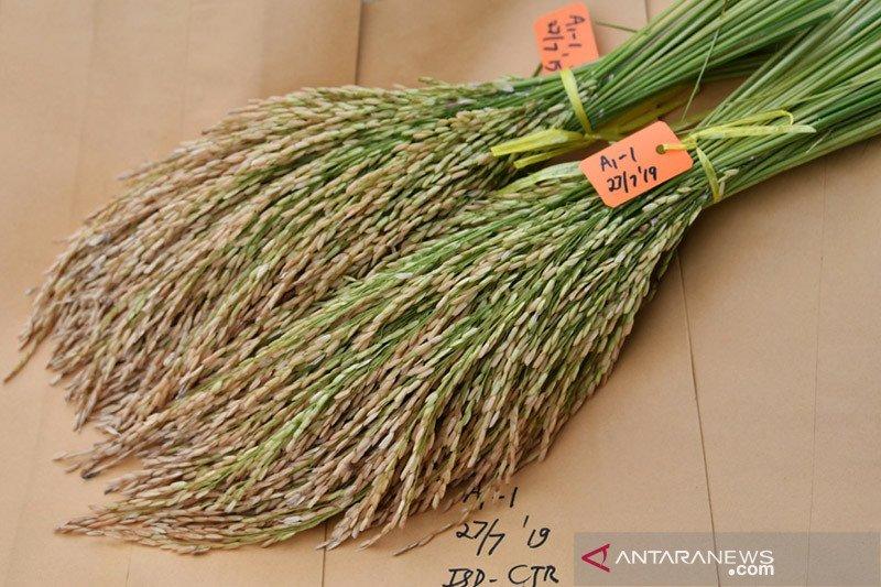 Kementan dukung Purwakarta tanam padi gogo di lahan eks tebangan