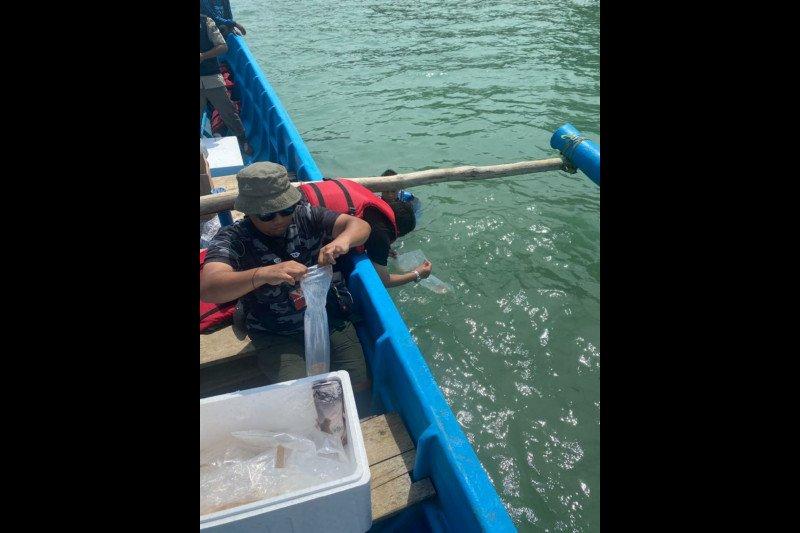 Bareskrim tangkap tersangka penyelundup benih lobster