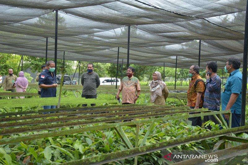 KLHK salurkan 50.000 bibit pohon untuk penghijauan Unilak saat wabah