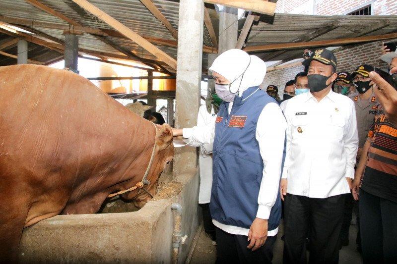 Khofifah: Peternak lakukan sertifikasi kesehatan hewan sebelum dijual