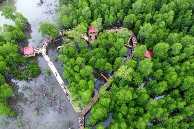 """Luhut akan canangkan program """"replanting"""" lahan mangrove"""