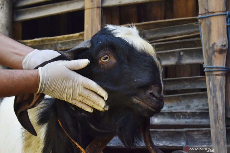 Pengurus Masjid Agung Medan tiadakan penyembelihan hewan kurban