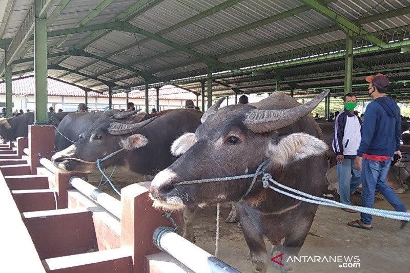 Muhammadiyah Kudus sarankan pemotongan hewan kurban di RPH