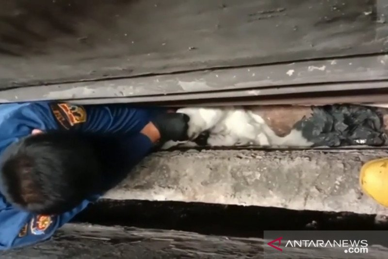 Damkar Jakarta Barat selamatkan induk dan enam anak kucing terjepit
