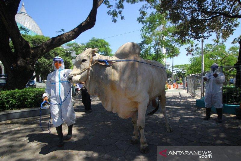 Gugus Tugas DIY: Penyembelihan hewan kurban minimalisasi kerumunan