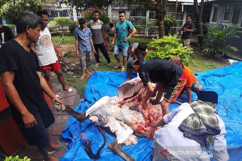 Warga binaan Lapas Padang diberi kesempatan sembelih dua sapi kurban