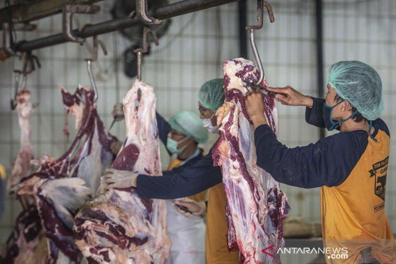 RPH Dharma Jaya Cakung sembelih 325 ekor sapi