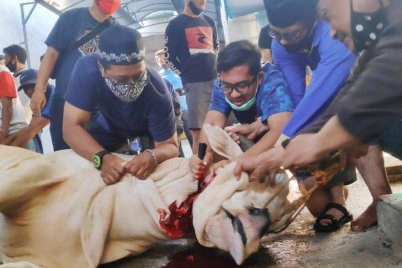 45 sapi kurban disembelih Rumah Aspirasi Haji Lulung