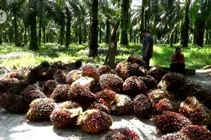 Strategi investasi Riau pasca-minyak dan sawit