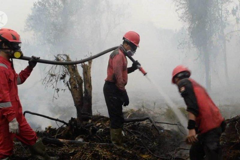 Upaya menjaga hutan Riau dengan Undang - Undang pidana Karhutla