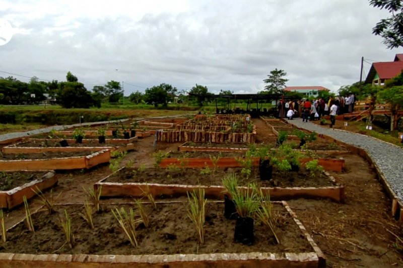 UTU kembangkan tanaman herbal