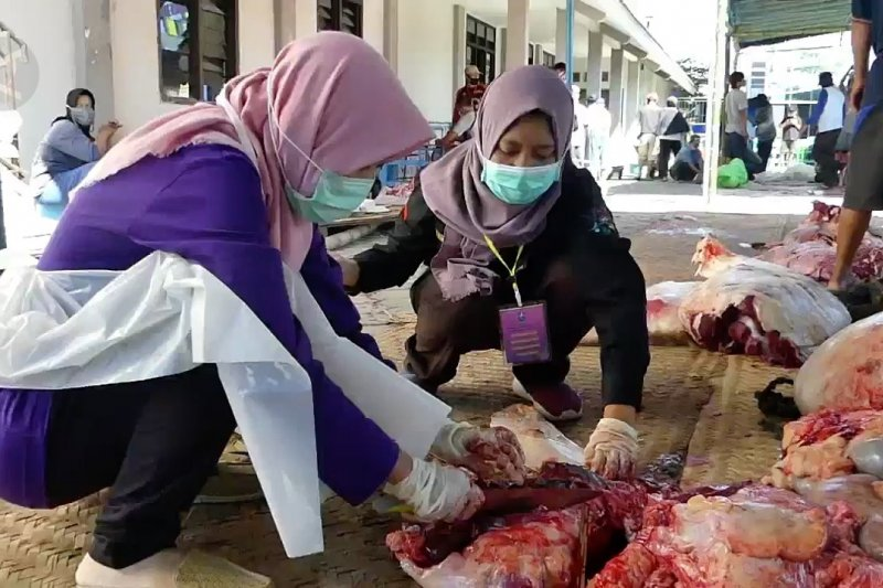 Tim pemantau hewan kurban Temanggung temukan cacing hati