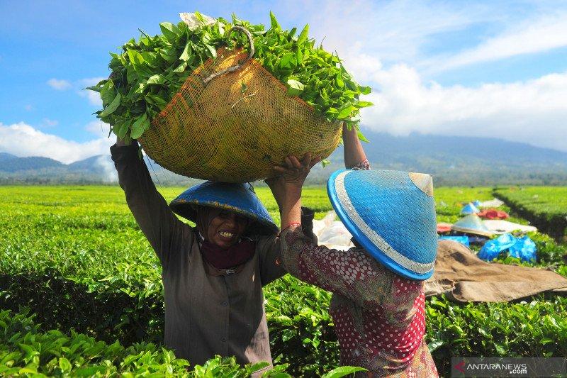 PTPN IV alokasikan dana Rp3 miliar dukung program pemulihan ekonomi