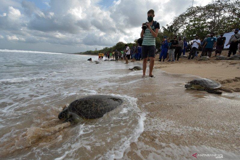 Polda Bali lepasliarkan 25 penyu sitaan di Pantai Kuta