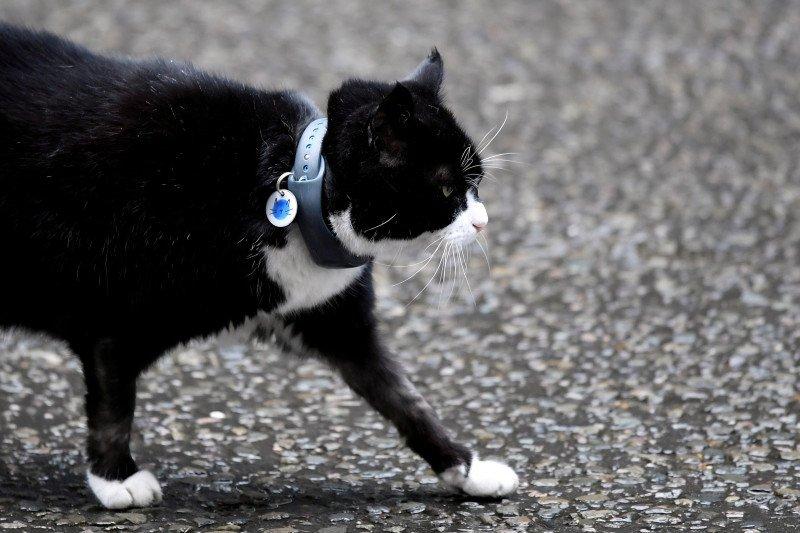 Kucing di kantor Kemlu Inggris akan pensiun