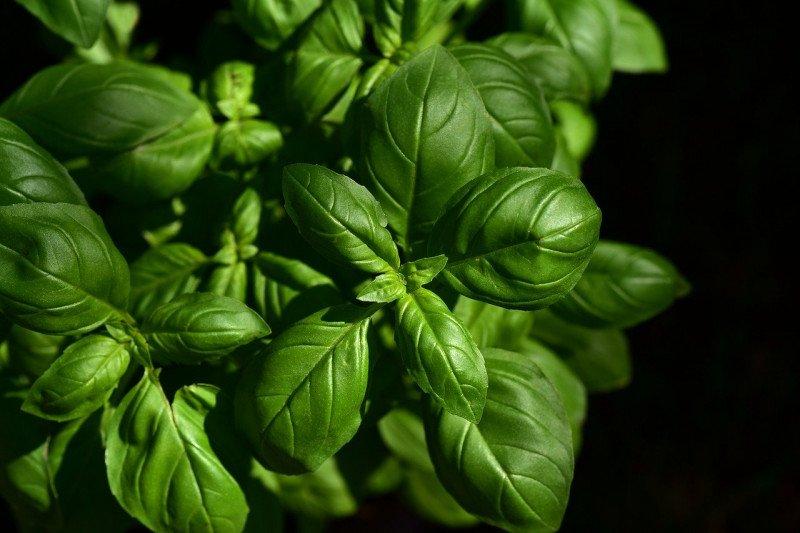 Rekomendasi tiga bumbu dan herba agar makan sayur jadi lebih nikmat