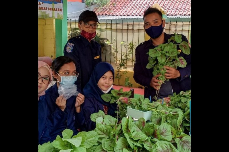 Kelurahan Manggarai Selatan panen perdana sayuran hidroponik