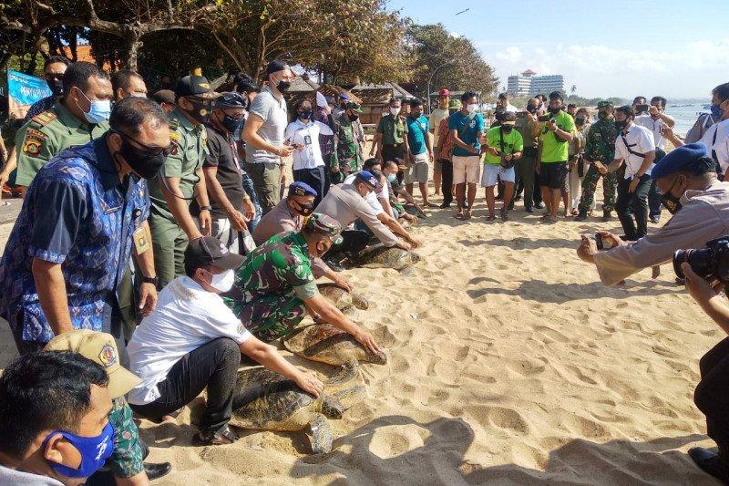 BKSDA Bali lepasliarkan delapan penyu hijau hasil sitaan