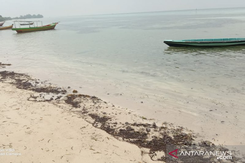 Tumpahan minyak mentah penuhi pesisir pantai Pulau Pari