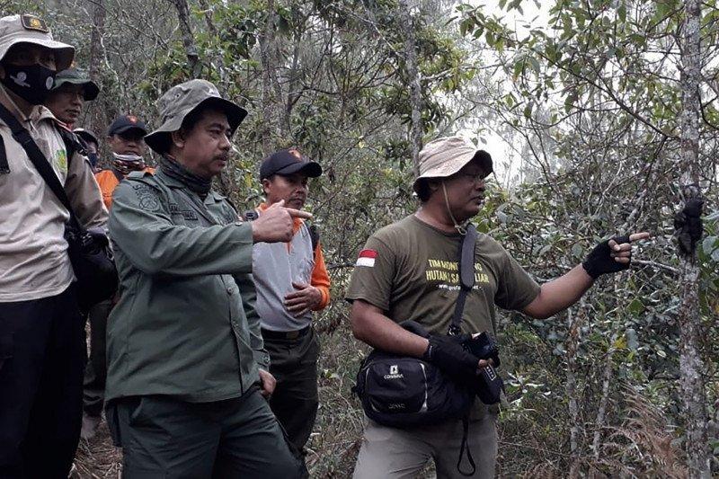ProFauna Indonesia minta kasus perburuan lutung Jawa diungkap