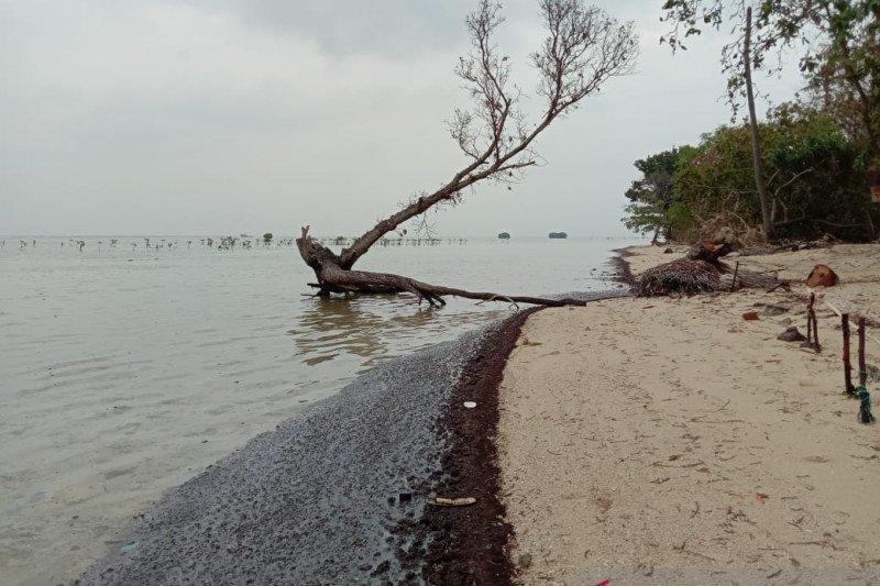Walhi desak pengambil kebijakan tangani limbah minyak di Pulau Pari