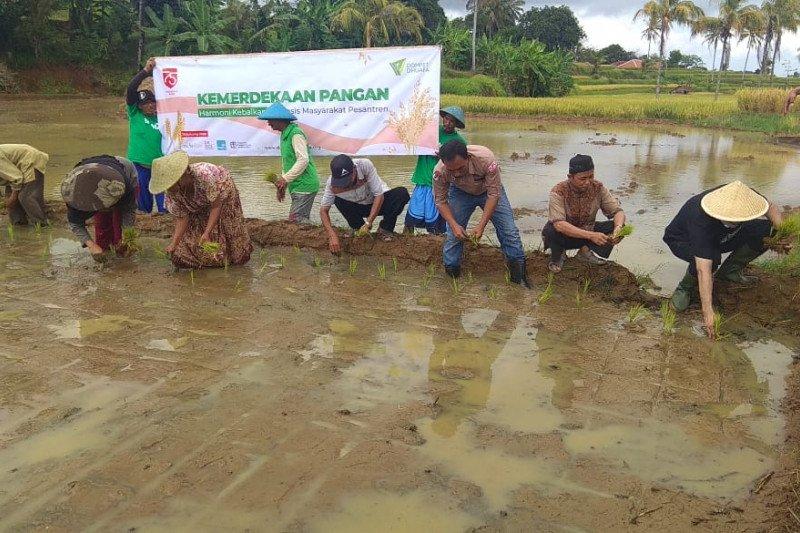 Dompet Dhuafa siapkan 1.000 ha sawah irigasi dukung ketahanan pangan