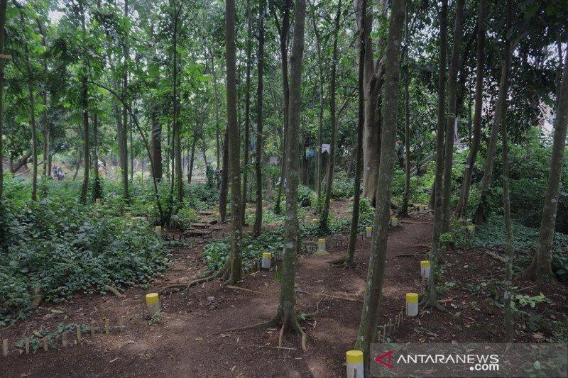 Hutan kampung di Kota Bogor berpotensi jadi objek wisata baru