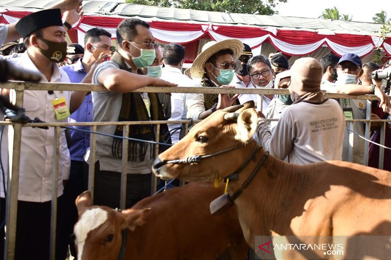 Kementan akan penuhi kekurangan bantuan 750 ekor sapi untuk NTB