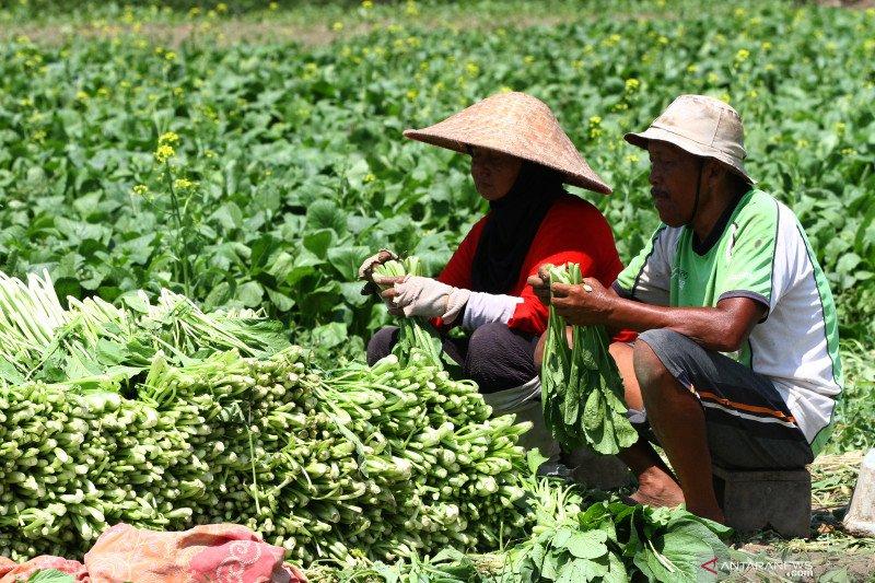 Investasi asing di pertanian relatif tertutup, terutama hortikultura