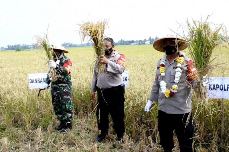 Panen padi di tengah pandemi untuk ketahanan pangan warga