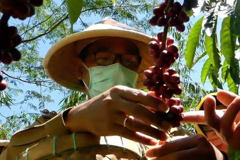 Bupati Temanggung dorong kopi jadi komoditas ekspor unggulan