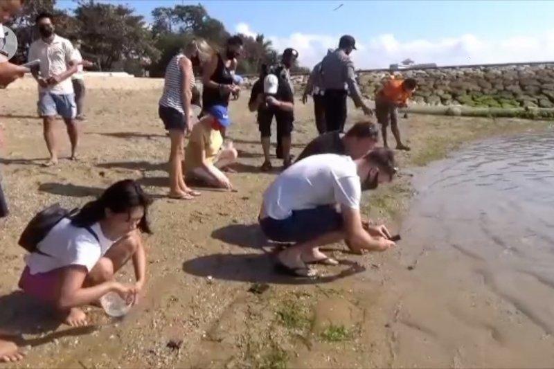 BKSDA Bali lepasliarkan 200 tukik di Pantai Sindhu