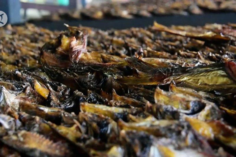 Produksi olahan ikan asap di kampung patin